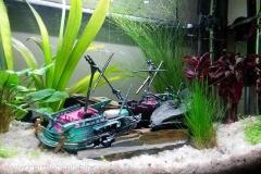 akvárium 2