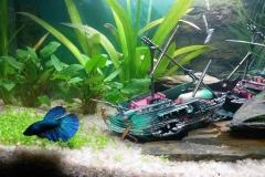 akvárium 3