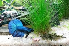 akvárium 4